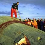 Walstrandung 1995 Sylt